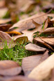 Fallen Autumn Leaves (Ontario, Canada). Beautiful fall colours on the grass Royalty Free Stock Image
