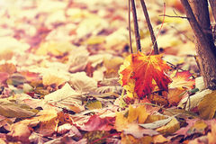 Fallen autumn leaves Stock Photos