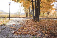 Fallen autumn leaves in park. Fallen autumn leaves in park on alley Royalty Free Stock Photos