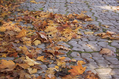 Fallen autumn leaves in park. Fallen autumn leaves in park on pavement Stock Photos