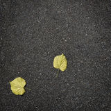 Fallen autumn leaves on pure asphalt Stock Photos