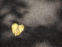 Fallen autumn leaves on pure asphalt Stock Photo
