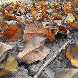 Fallen autumn leaves with raindrops Royalty Free Stock Photography