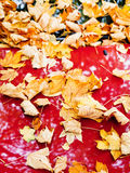 Fallen autumn leaves on red car Stock Photos