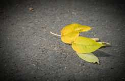Fallen autumn leaves. Royalty Free Stock Image