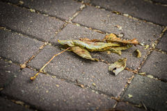 Fallen autumn leaves. Royalty Free Stock Photography