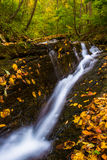 Fallen autumn leaves and a small waterfall on Oakland Run in Hol Royalty Free Stock Photos