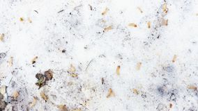 Fallen autumn leaves in the snow. Goodbye autumn, hello winter royalty free stock photo