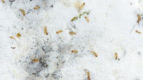 Fallen autumn leaves in the snow. Goodbye autumn, hello winter stock photo