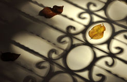Fallen autumn leaves with vintage fence shadow Stock Photography