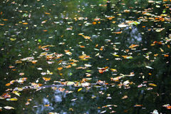 Fallen autumn leaves on the water Stock Photo