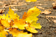 Fallen autumn leaves on the wet road Royalty Free Stock Photos