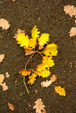 Fallen autumn leaves on the wet road Stock Images