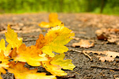 Fallen autumn leaves on the wet road Royalty Free Stock Images