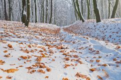 Fallen autumn leaves on white snow in the forest Royalty Free Stock Photo