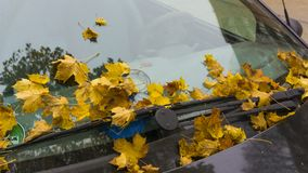 Fallen autumn leaves on the windshield of a car stock image