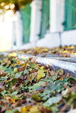 Fallen autumn leaves yellow fence road Royalty Free Stock Photos