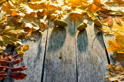 Fallen autumn maple, oak and towering mountain ash leaves on old wooden floor Stock Photo