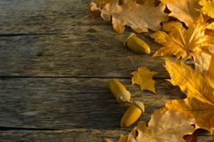 Fallen autumn maple, oak and towering mountain ash leaves on old wooden floor Royalty Free Stock Photography
