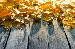 Fallen autumn maple, oak and towering mountain ash leaves on old wooden floor Stock Photography
