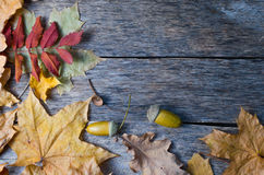 Fallen autumn maple, oak and towering mountain ash leaves on old wooden floor Royalty Free Stock Photo