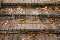 Fallen autumn red maple leaves on granite gray stairs Stock Photography