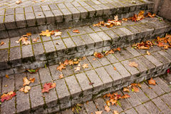 Fallen autumn red maple leaves on granite gray stairs Stock Photo