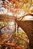 Fallen autumn tree Stock Photo