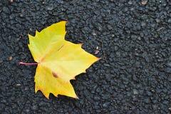 Fallen autumn yellow maple leaf on road Royalty Free Stock Photos