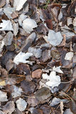 Fallen autumnal leaves on cold ground in the forest Royalty Free Stock Photos