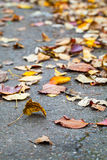 Fallen autumnal leaves lay on the asphalt road Stock Photos