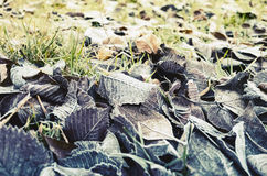 Fallen autumnal leaves lay on grass. With frost, vintage stylized photo with cold tonal correction filter, old style effect Stock Images