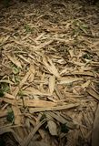 Fallen bamboo leaves at Waeruwan Garden in PhutthamonthonBuddhist park in Phutthamonthon district,Nakhon Pathom Province of Thail. The bamboos from every regions Stock Photos