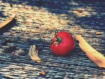 Fallen berry Royalty Free Stock Photography