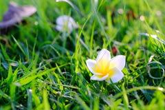 fallen blomma royaltyfri fotografi