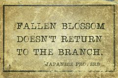 Fallen blossom JP Royalty Free Stock Photography