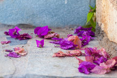 Fallen bougainvillea leaves on a stone floor Royalty Free Stock Images