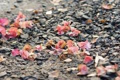 Fallen Bougainvillea Royalty Free Stock Photos