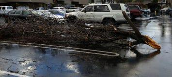 Fallen branch Royalty Free Stock Photo