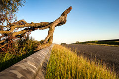 Fallen Branch Stock Image