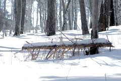 Fallen branch in the winter forest royalty free stock image