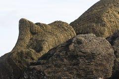 A fallen and broken Moai statue Stock Images
