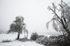 Fallen and broken trees covered with sleet. And ice Stock Photos