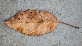 Fallen Brown Leaf on Concrete Floor (16:9 Aspect Ratio) Stock Images