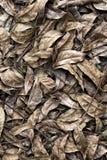 Fallen brown leaf Stock Photo