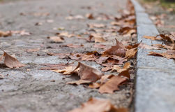 Fallen brown leaves around curb at park path Stock Photography