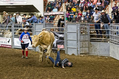 Fallen Bull Rider Royalty Free Stock Photos