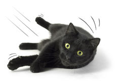 Fallen Cat. A Black Cat falling on the white background Royalty Free Stock Photo
