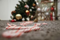 Fallen Christmas Tree and a Pathway of Candy Canes. Line of peppermint candy canes leading to a fallen Christmas tree. On carpet royalty free stock images