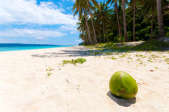 Fallen coconut Royalty Free Stock Photography